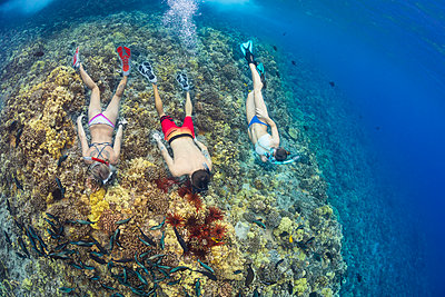 Slate pencil sea urchins (Heterocentrotus mammillatus) colour the hard coral in this Hawaiian reef scene with three free divers, Molokini Marine Preserve off the island of Maui; Maui, Hawaii, United States of America - p442m2032388 by Dave Fleetham