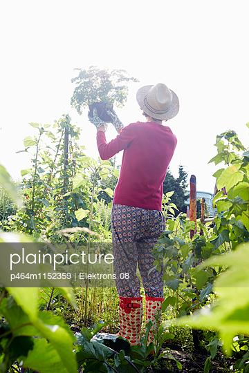 Gartenwelt - p464m1152359 von Elektrons 08