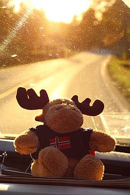 Soft moose at rear window pane - p1165m1195423 by Pierro Luca