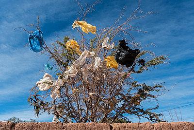Plastic bags in tree,  San Pedro de Atacama, Chile - p1403m1534113 by VW PICS