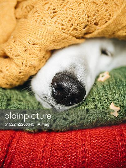 Sleeping dog - p1522m2260643 by Almag