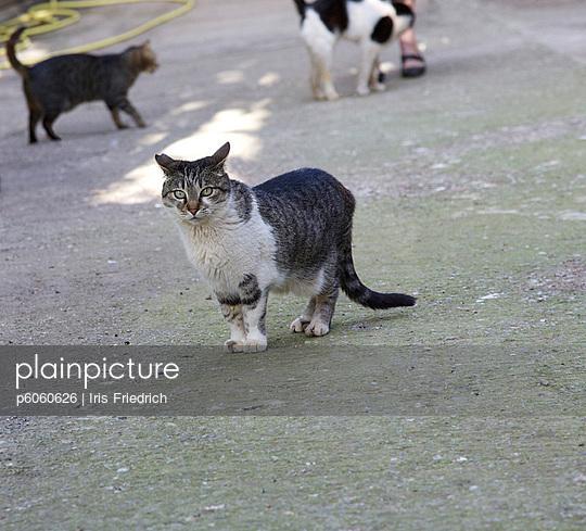 Streunende Katzen - p6060626 von Iris Friedrich