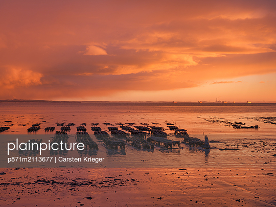 Shannon Estuary, County Clare, Munster, Republic of Ireland - p871m2113677 by Carsten Krieger