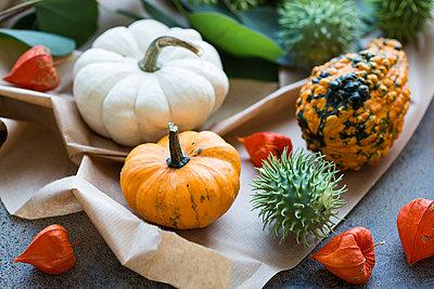 Autumnal decoration, ornamental pumpkins - p300m2042205 von JLPfeifer