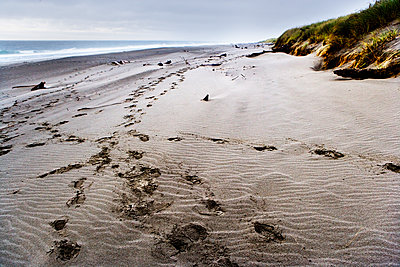 Footprints in the sand along a beach. - p343m1554748 by Ron Koeberer