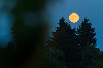 Full moon - p417m892735 by Pat Meise