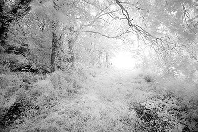 Unheimlicher weg - p1137m1201425 von Yann Grancher