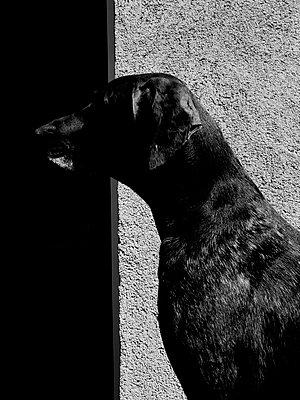 Portrait of a dog - p551m1582907 von Kai Peters