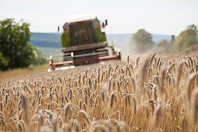 Agriculture - p842m754601 by Renée Del Missier