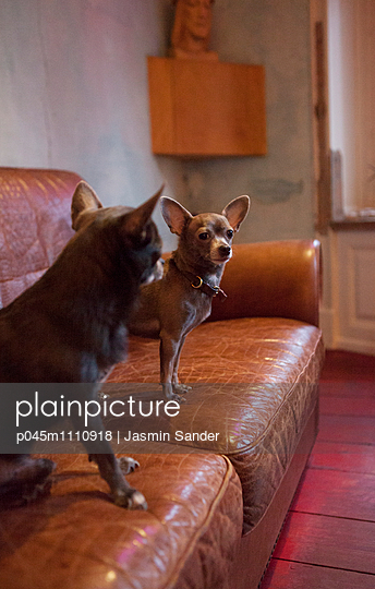 PET - p045m1110918 by Jasmin Sander