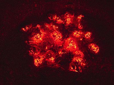 Glühende Kohle - p1012m1168957 von Frank Krems