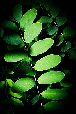 Green leaves - p1149m1474755 by Yvonne Röder