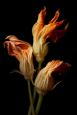 Squash Blooms - p1166m2136358 by Cavan Images