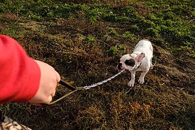 Man pulls the dog on a leash - p1363m2031995 by Valery Skurydin
