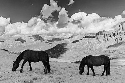 Pferde auf Alm in den Dolomiten - p1463m2192661 von Wolfgang Simlinger