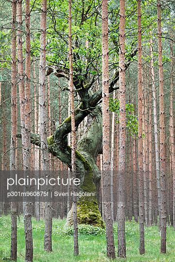 p301m960875f von Sven Hagolani