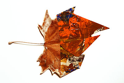 Leaves, collage, white background - p1017m2221818 by Roberto Manzotti