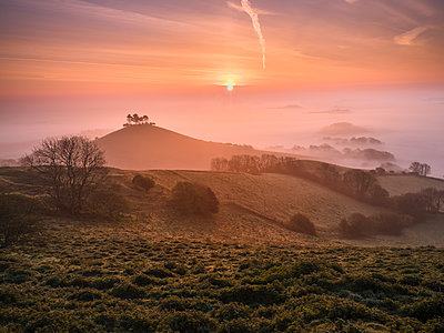 Misty sunrise over the distinctive pine topped Colmer's Hill near Bridport, Dorset, England, United Kingdom - p871m2114176 by Baxter Bradford