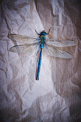 Dragonfly on crumpled paper - p1312m2284472 by Axel Killian