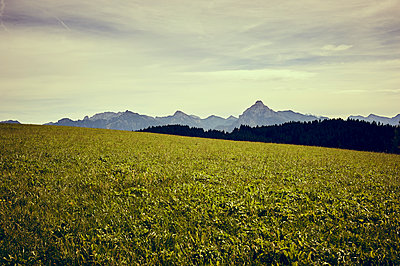 Mountain meadow in front of alpine panorama - p900m1515154 by Michael Moser