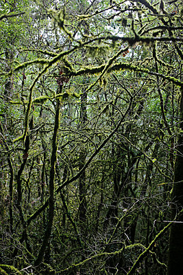 Forest - p1307m2122272 by Agnès Deschamps