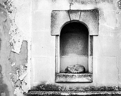 Cat sleeping - p1153m951519 by Michel Palourdiau