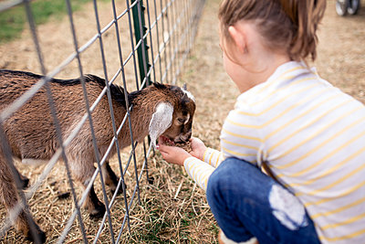 High angle view of girl feeding food to goat kid at farm - p1166m1543279 by Cavan Social