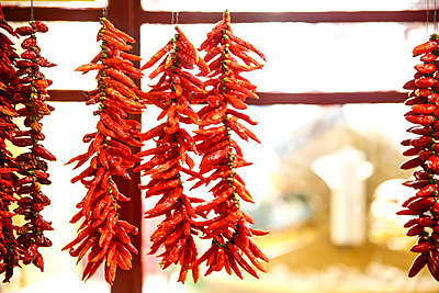 Air drying of red chili peppers  - p1643m2229412 by janice mersiovsky