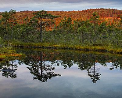 Sweden, Vastmanland, Hallefors, Knuthojdsmossen wetland - p352m1349387 by Gustaf Emanuelsson