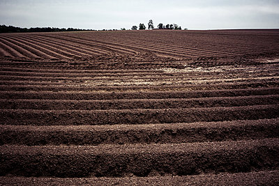 Agricultural crop land - p354m1043358 by Andreas Süss