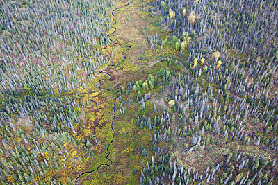 Aerial View Of Twitter Creek Running Through A Forest On Kenai Peninsula; Alaska, United States Of America - p442m1499667 by Scott Dickerson