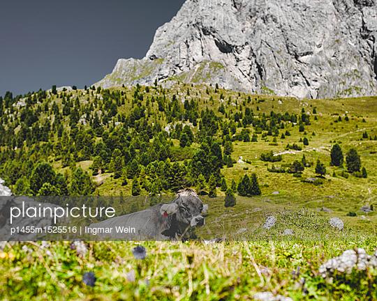 Bergregion Secada in Südtirol, Italien - p1455m1525516 von Ingmar Wein