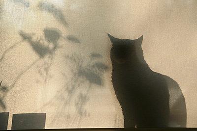 Katzenschatten - p1650886 von Andrea Schoenrock