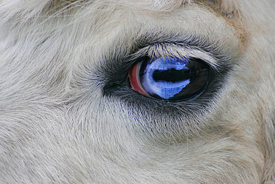 Close up of animal's eye - p4421645f by Design Pics