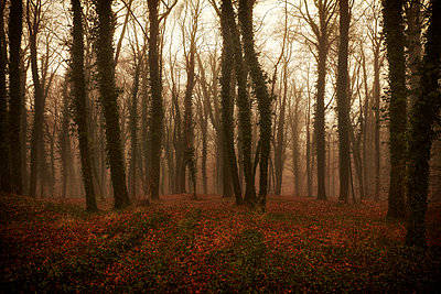 Mystic forest - p1092m2054252 by Rolf Driesen