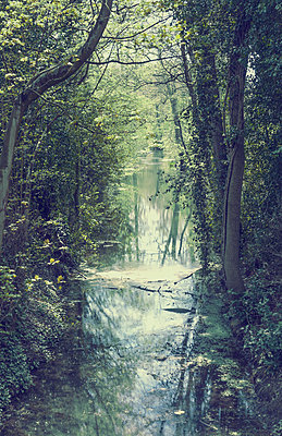 Forest river - p1390m1441434 by Svetlana Sewell