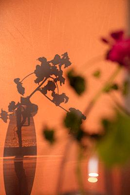 Malve in Vase als Schattenspiel - p825m2044223 von Andreas Baum