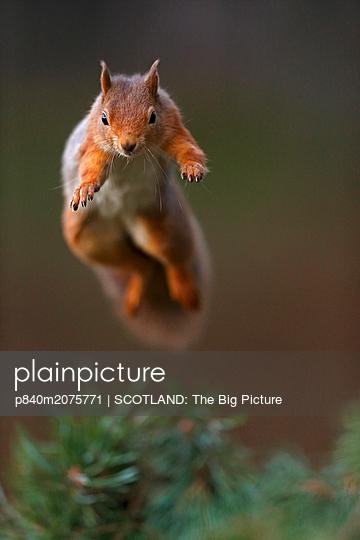 p840m2075771 von SCOTLAND: The Big Picture