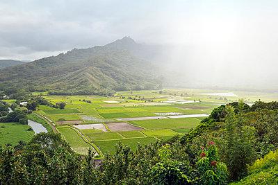 Traditionelle Tarofelder auf Kauai, Princeville - p1196m1015241 von Biederbick & Rumpf