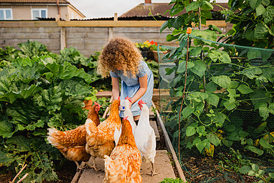 Little girl feeding chickens in allotment - p300m2030081 by Nicole Matthews