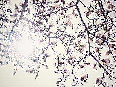 Spring - p715m755890 by Marina Biederbick