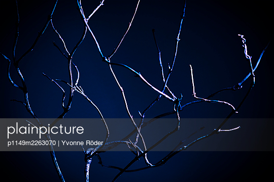 Branches - p1149m2263070 by Yvonne Röder