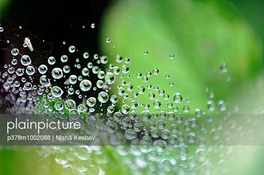 Dew on Spider web - p378m1002088 by Nisha Keshav