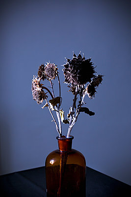 Withered sunflowers - p1149m2141438 by Yvonne Röder