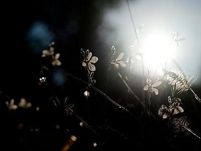 Blüten im Sonnenlicht - p551m2056696 von Kai Peters