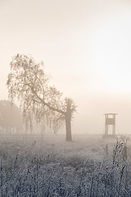 Cold snap with hoarfrost - p739m1191055 by Baertels