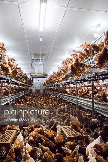 Hühnerstall 2 - p1388m1586912 von Julia Unkel