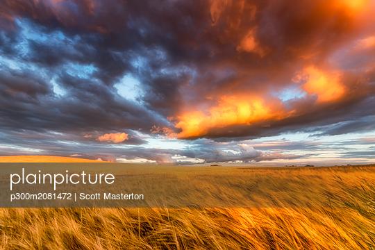 United Kingdom, East Lothian, barley field at sunset - p300m2081472 by Scott Masterton