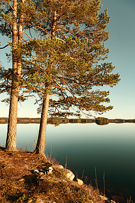 Pines on the waterfront - p1168m1132636 by Thomas Günther
