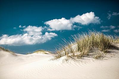 Grass growing on sand dunes - p301m1101964f by Sebastian Doerken